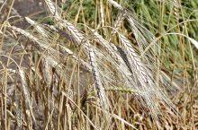 L'estate a tavola: i nutrienti fondamentali per affrontare al meglio il caldo